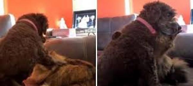 Il Cane Accarezza Il Gatto E Il Micio Ricambia Con Un Abbraccio