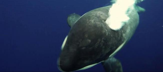 Mammifero Detto Poltrone.Il Faccia A Faccia Con L Orca Assassina E Incredibile Il
